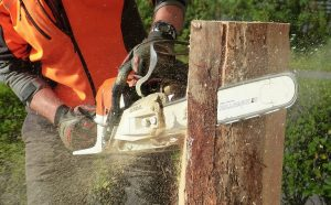 best petrol chainsaw